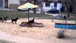 собаки на детской площадке