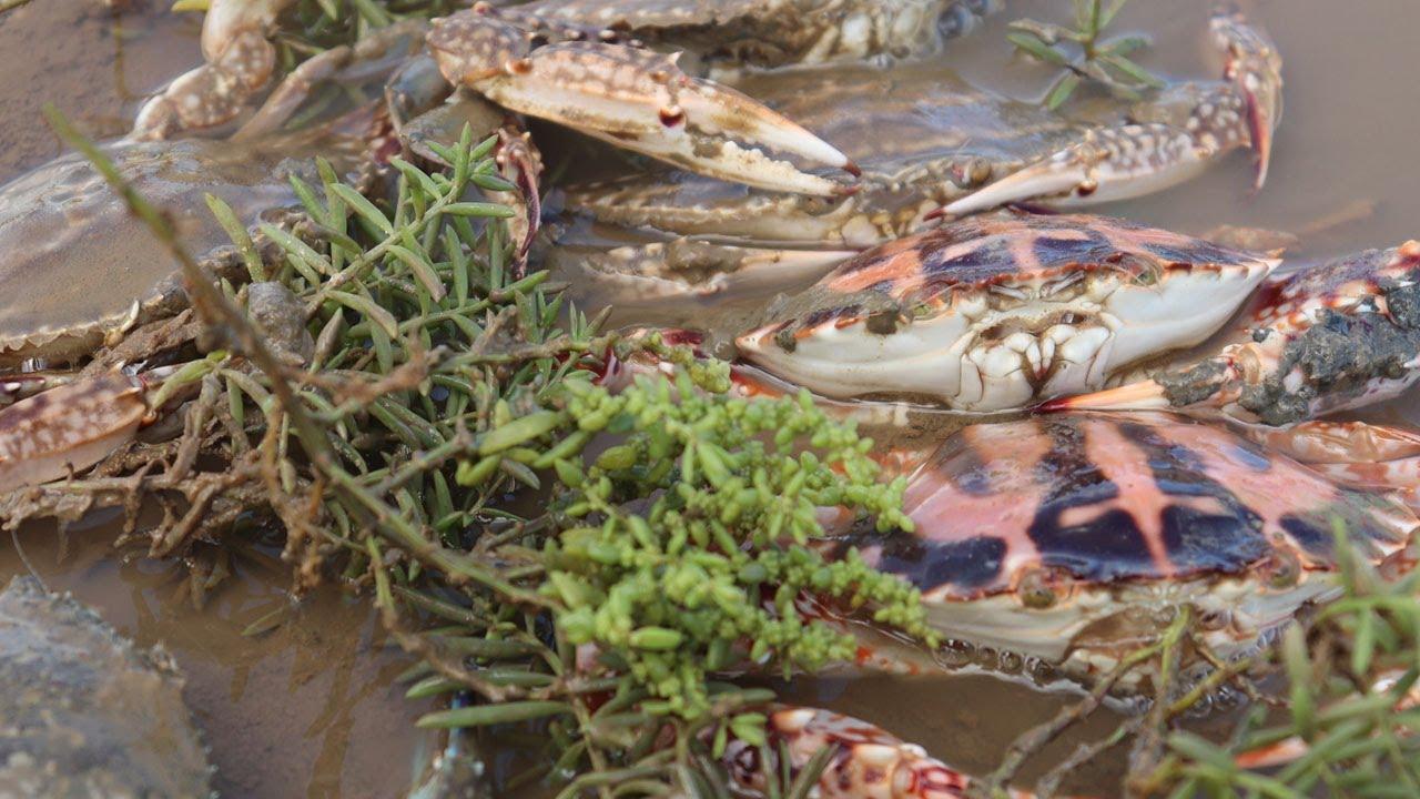妹子趕海翻石板抓到大螃蟹和海螺,看到兇猛的海泥鰍鑽洞,一舉拿下【海村小梅】