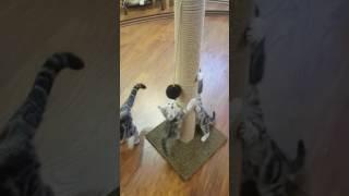 Мама кошка учит котят🤗 за обои можно не переживать.