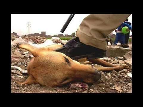 Animal cruelty essays