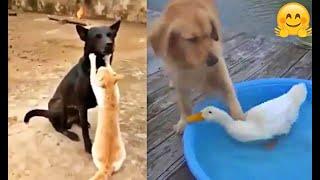 Amizades incomuns...Unusual Friendships...Amistades inusuales