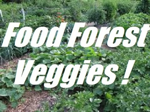 Vegetable Growing in a Permaculture Food Forest