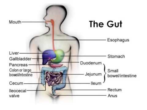 Gut Health Seminar With Dr. Chris Link