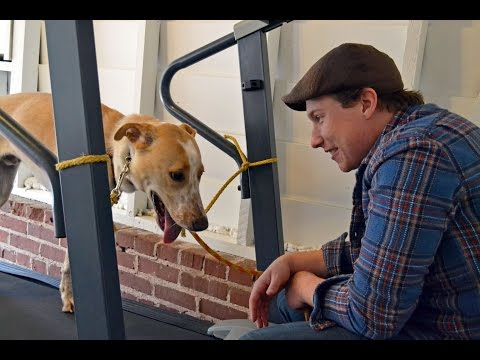Treadmill 2.0: How To Teach Your Dog To Walk On The Treadmill