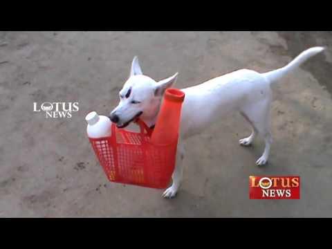 Pudukkottai Seenu Dog Story