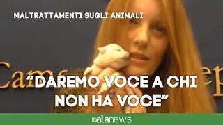 """Crudeltà sugli animali, on. Brambilla: """"Pene da inasprire. Sino a sei anni di carcere"""""""
