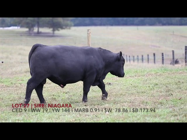 Edgewood Angus Lot 27