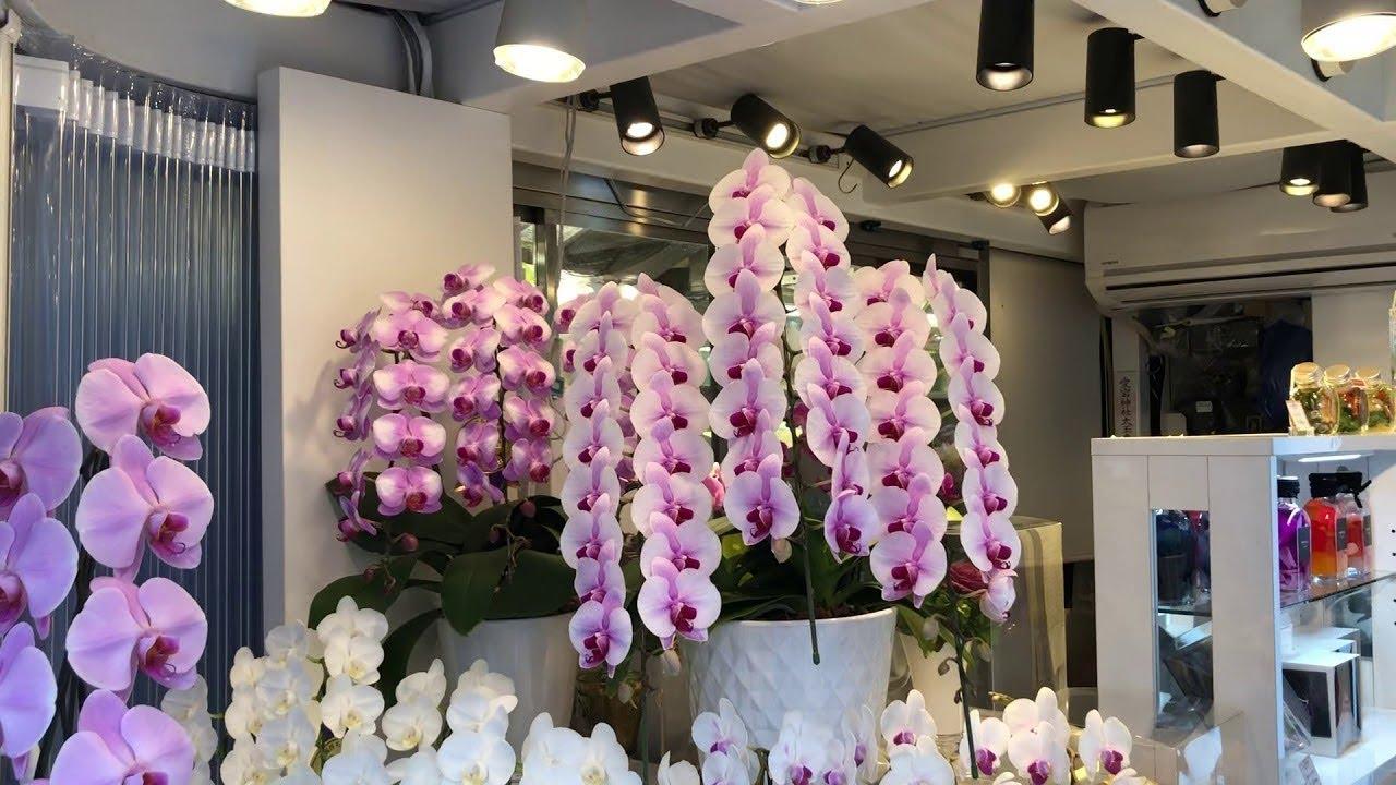 Download Nie trzymaj orchidei w domu! 5 tajemnic dotyczących tych zagadkowych roślin
