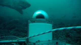 Video Shark Spy | Air Jaws Apocalypse - Shark Week 2012 download MP3, 3GP, MP4, WEBM, AVI, FLV Desember 2017