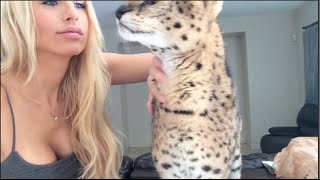 Smart Serval Stops Biting Hard