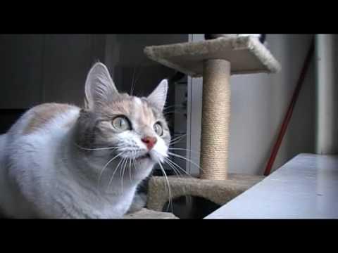 Cat Making Strange Noise