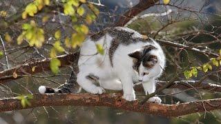 Как снимать кошек с деревьев???