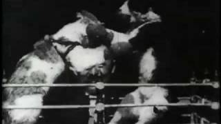 The Boxing Cats (Prof. Welton