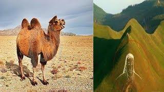 成吉思汗墓消失了近800年, 唯一的「鑰匙」卻在這頭駱駝身上
