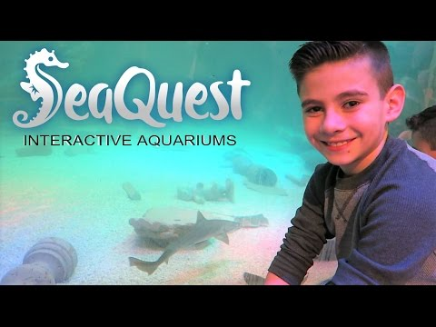 SEA QUEST INTERACTIVE AQUARIUM LAS VEGAS | TOUCHED IT | PHILLIPS FamBam Vlogs