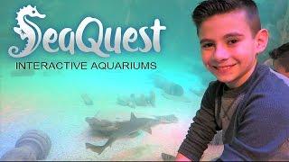 SEA QUEST INTERACTIVE AQUARIUM LAS VEGAS | TOUCHED IT | PHILLIPS FamBam Vlogs