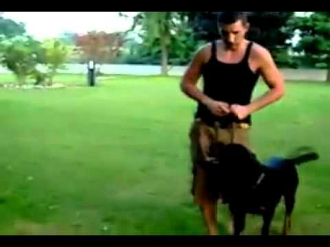 Rottweiler equilibrio e potenza