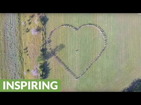 Guests form heart shape for drone at wedding