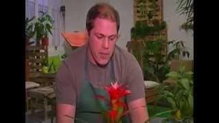 Le Savoir Vert : le Bromélia