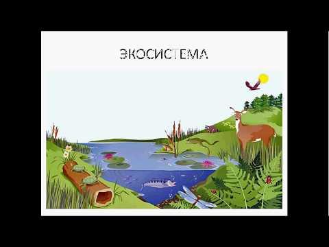 Видео: Разбор части С 5 ЕГЭ по биологии. Задача 8. Подготовка к ЕГЭ и ОГЭ по биологии
