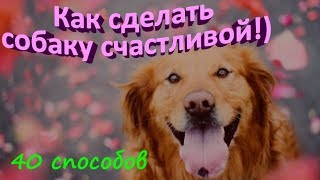 КАК СДЕЛАТЬ СОБАКУ СЧАСТЛИВОЙ  40 способов  HOW TO MAKE A DOG HAPPY