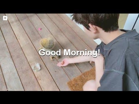 "【TFBOYS 王源】王源RoyWang工作室「xXx""极限特工IV ""洛杉矶集训:LA的一天从喂喂松鼠🐿️开始」-Roy Wang"