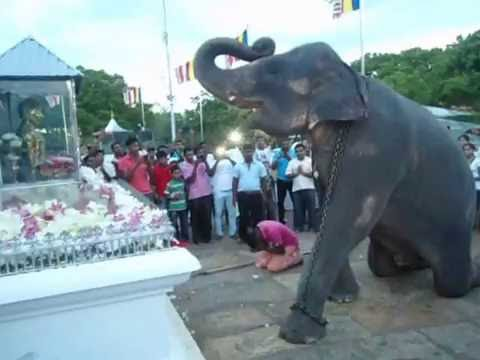 elephant at kiri vehera සඳහා පින්තුර ප්රතිඵල