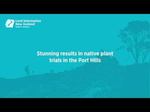Stunning results in native plant trials in Port Hills