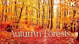 Enchanting Autumn Forests with Beautiful Piano Music  4K Autumn Ambience & Fall Foliage