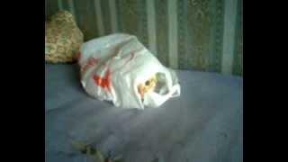 Кот Мося Ужасы