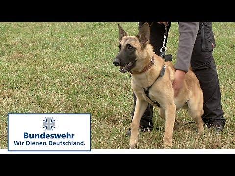Vom Welpen zum Diensthund der Bundeswehr Teil 4 / 5
