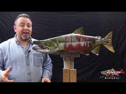 Competition Chum Salmon Trailer - Learn Fish Taxidermy !