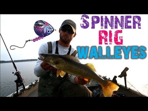 Trolling Spinners For Summer Walleyes