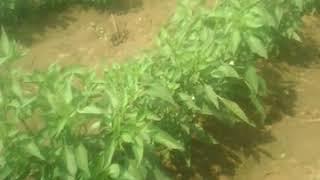видео магазин Agroseeds
