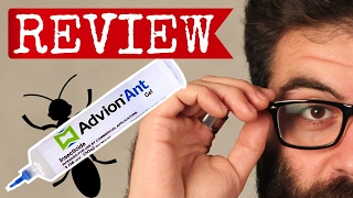 advion ant gel review will this ant bait help you get rid of ants