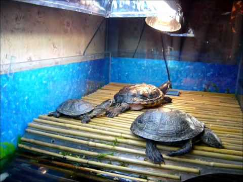 Все для черепахи своими руками 794