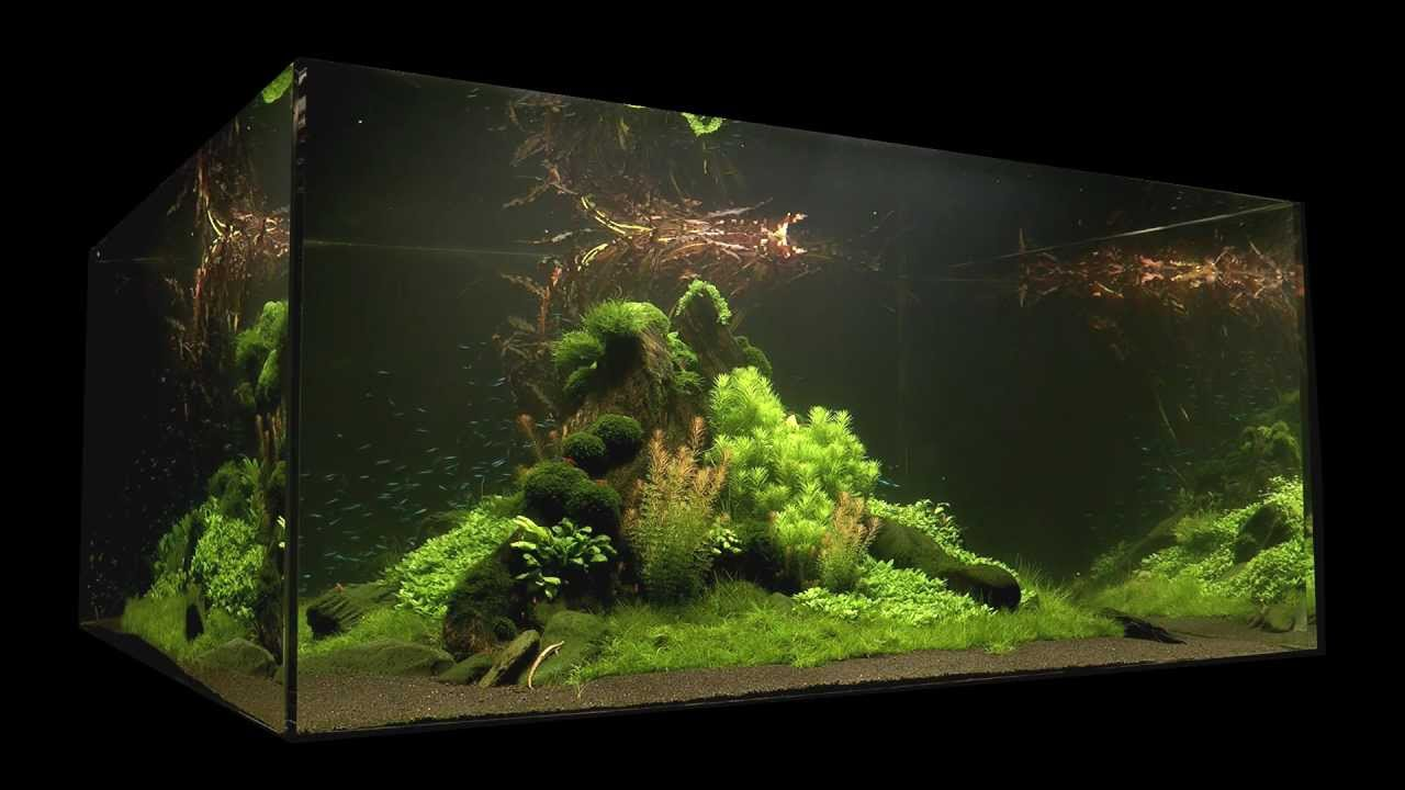 Fish Tank Wallpaper Hd Nature S Chaos Aquascape 1 Year Old By James Findley Youtube