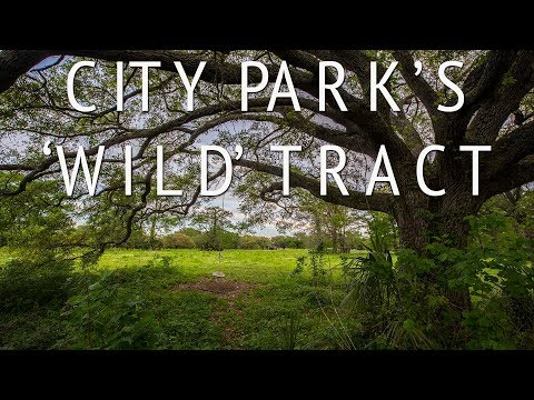 City Park's 'Wild' area is a haven for nature lovers and dog walkers