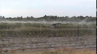 Blueberry Farm Sprinklers in North Carolina 042909