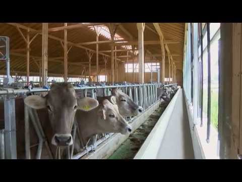 Feedstar - The Automatic Feed System - EDER Tuntenhausen Germany