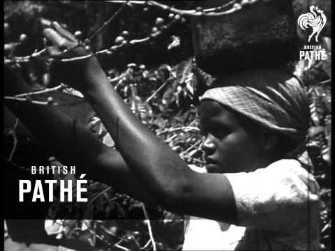 Coffee Plantation Nr Kilimanjaro (1940-1949)