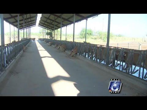 Family-owned dairy farms struggling to survive