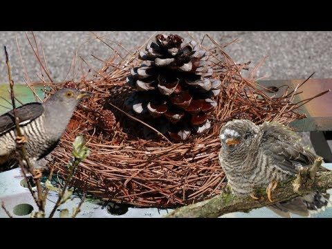 How to make Table Centerpiece 🐦Bird Nest 🐦 with Epoxy Resin