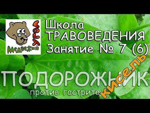 Школа травоведения. Занятие № 7 (6) ПОДОРОЖНИК против гастрита - КИСЕЛЬ.