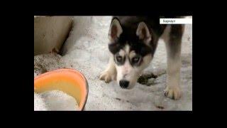 В Барнауле украли собаку