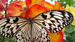 очень красивые бабочки .wmv