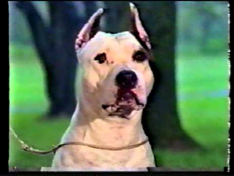 AKC 1989  The American Staffordshire Terrier PART 1.mpg