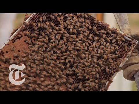 A Disastrous Year for Bees: 'We Can't Keep Them Alive'