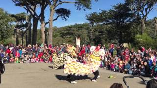 Lunar New Year at SF Zoo