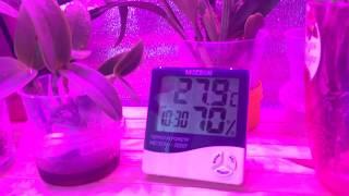 эффективный способ повышения влажности для орхидей. Наглядный пример